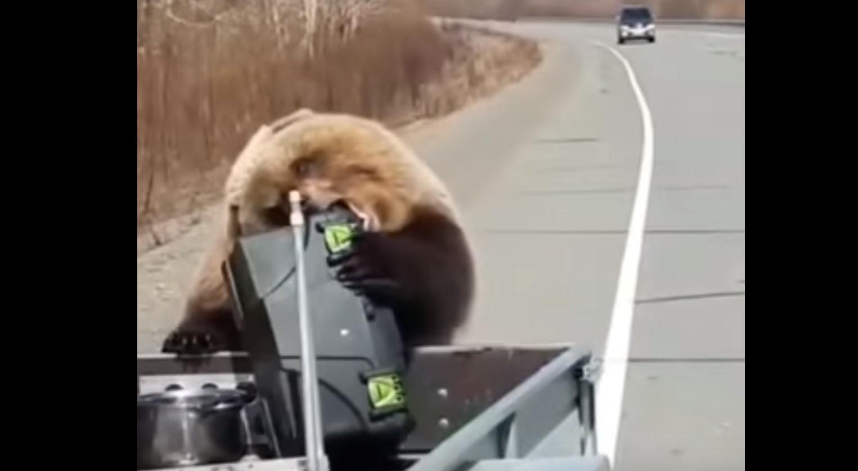 بالفيديو..دب يسرق براد من سيارة صياد ويهرب بعيدا