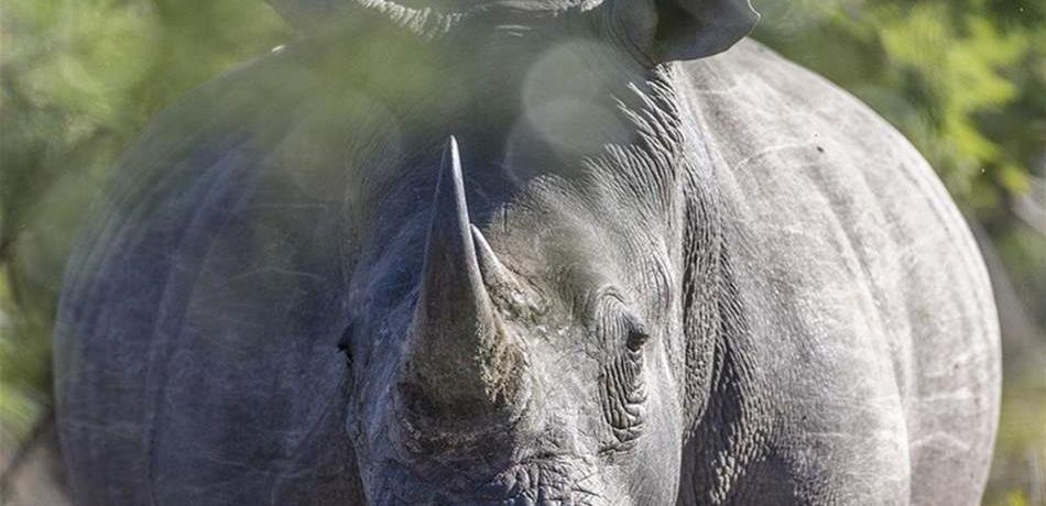 """امرأة """"تتحدى"""" وحيد القرن.. وهذا ما حصل لها (فيديو)"""