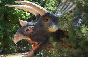الصين... طلاب يعثرون على بيض ديناصور نادر