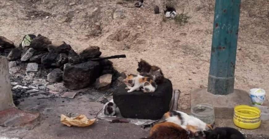 المكان الذي حرقت فيه القطط (موقع جمعية الرفق بالحيوان - طنجة)
