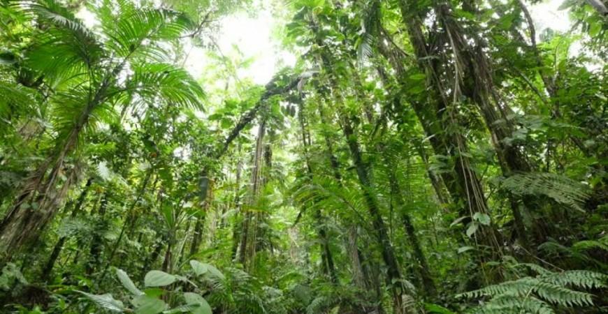 """زراعة الأشجار تساعدنا على التخلص من آثار الكربون (موقع """"بيك دان. نت"""")"""