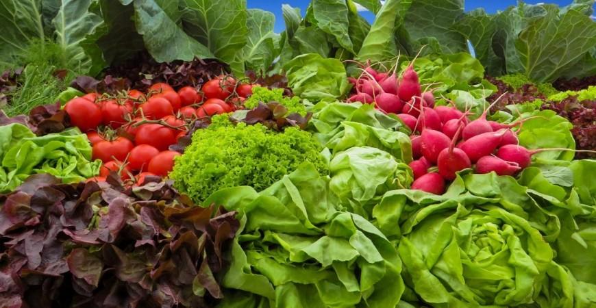 يجب أن تقدم المدارس وجبة أسبوعية مكونة من البروتين النباتي (بي إكس هير)