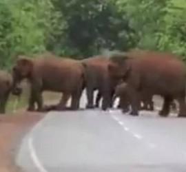 """مشهد مؤثّر لفيلة في موكب """"جنازة"""" صغيرها (فيديو)"""