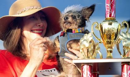 """""""سكامب ترامب"""" يفوز بجائزة أقبح كلب في العالم (فيديو)"""