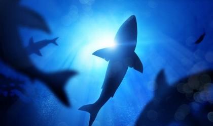 """أسماك القرش معرضة لـ""""الاختفاء"""".. في هذا البحر!"""