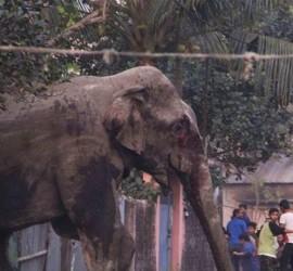 حادثة مروعة.. فيل ينقل بخرطومه طفلة من فراشها إلى الشارع ويقتلها!