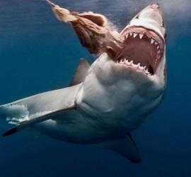 بالفيديو... سمكة قرش كادت تبتلع فتاة صغيرة في المياه الضحلة
