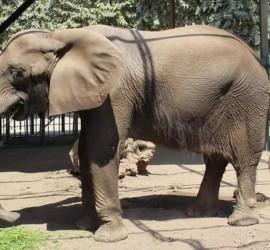حديقة حيوانات الجيزة المصرية تفقد آخر أفيالها