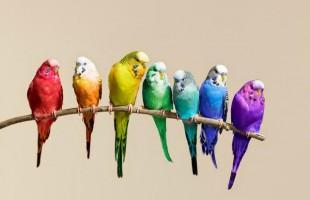 لماذا حظرت مصر استيراد طيور الزينة