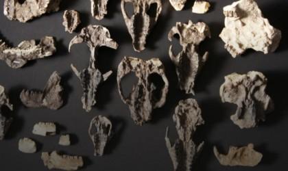 حفريات من عصر ما بعد الديناصورات تظهر تطور الثدييات