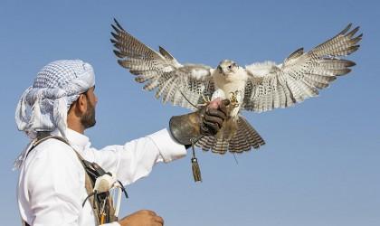سوق الصقور في السعودية.. ملايين الدولارات سنويا وثلاثة أنواع مفضلة