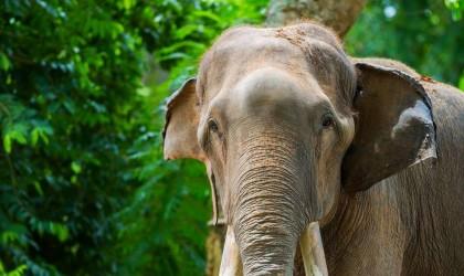 """بعد قتله 5 أشخاص.. إلقاء القبض على الفيل """"بن لادن"""" في الهند"""